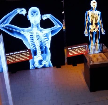 Изложбата Човешкото тяло в София